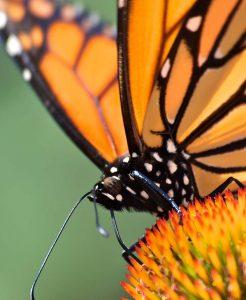 Venha ver as borboletas no primeiro borboletário da cidade de São Paulo. Borboletário Águias da Serra